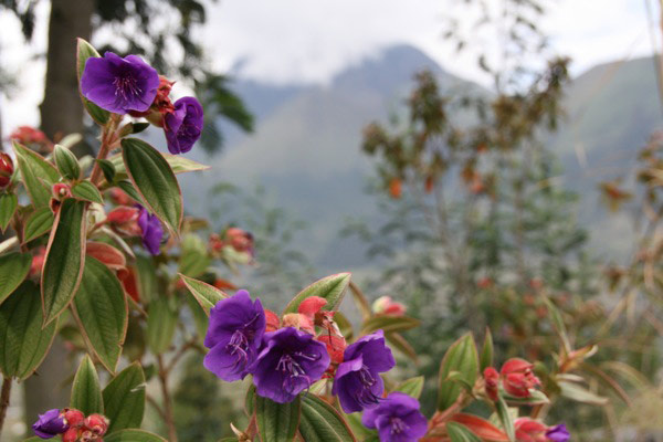 flower_of_ecuador